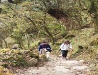 Ghorepani-poonhill